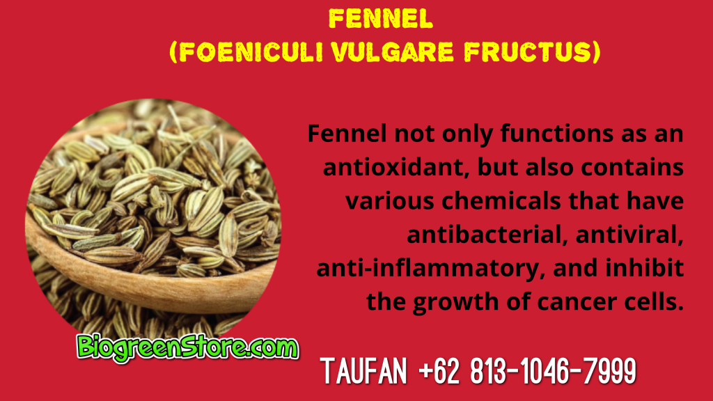 Bio Inflavia Indonesia Traditional Medicine fennel