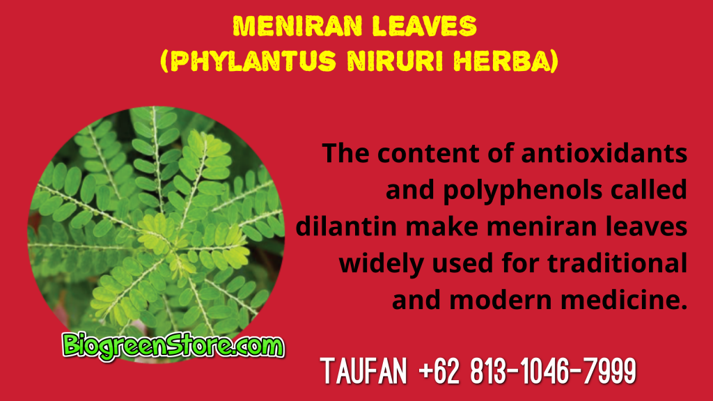 Bio Inflavia Indonesia Traditional Medicine meniran leaves