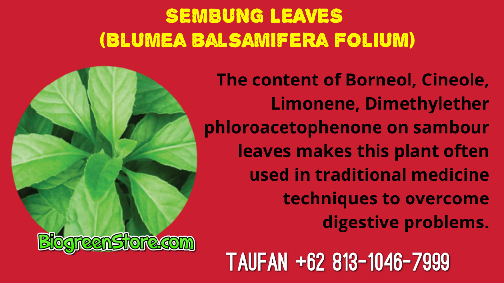 Bio Inflavia Indonesia Traditional Medicine sambung leaves